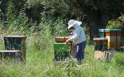 De bijzondere belevenissen van boerin Nelie