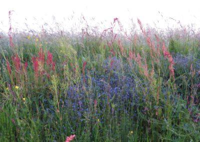 De Drie Wedden - Kruidenrijk grasland